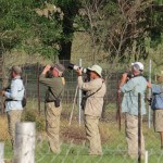 Our birding guests chasing the Red Necked Ryneck on our property